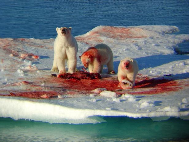 1403 Joe Rogan Forrest Galante Polar Bears