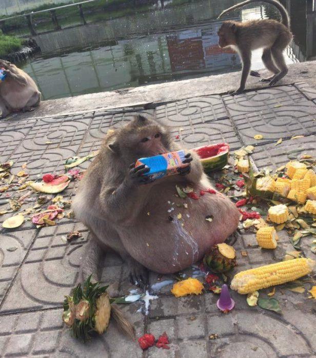 Joe Rogan Forrest Galante Fat Monkey