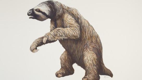 Joe Rogan Giant Sloth